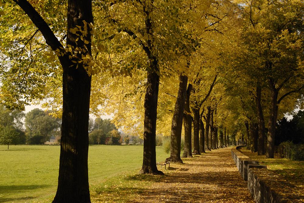 Herbst in Köln