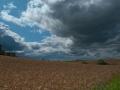 Feld bei Wipsowo
